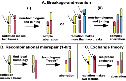 Chromosome-breakage genomic instability and chromothripsis ...